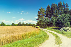 Countryside road among fields and forest Royalty Free Stock Photography