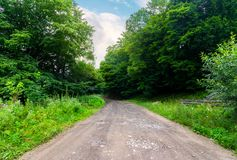 Countryside road through forest. Beautiful landscape on fresh summer morning Royalty Free Stock Photography