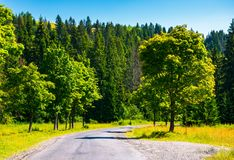 Countryside road through forest. Beautiful landscape on fresh summer morning Stock Photo