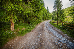 Countryside road in the forest Royalty Free Stock Photography