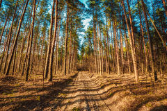 Countryside road through forest. Sunset Sunrise In Royalty Free Stock Photos