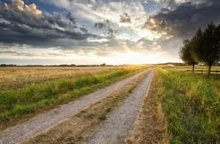 Countryside road at gold sunset Stock Photography
