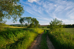 Countryside road in green field on background of morning sky Royalty Free Stock Photo