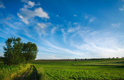 Countryside road in green fields on sky background Royalty Free Stock Image