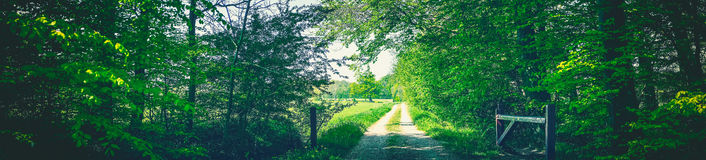Countryside road in a green forest Royalty Free Stock Photography