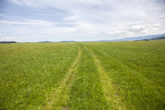 Countryside Road Through Green Meadow Royalty Free Stock Photo