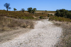 Countryside road landscape. Countryside landscape with gravel road in late summer stock photos
