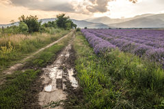 Countryside road by lavender fields Stock Photography