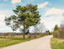 Countryside road with lonely pine and clouds floating across sky Royalty Free Stock Images