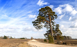 Countryside road with lonely pine and haystacks Stock Photos