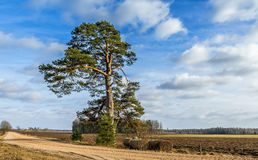 Countryside road with lonely pine and haystacks Stock Photo