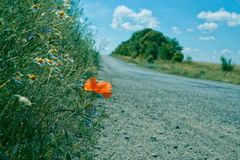 Countryside road with meadow on a side. With beautiful poppy flower and a lot of camomiles. blue sky with clouds Stock Photos