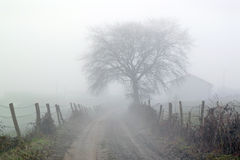 Countryside road in the morning Royalty Free Stock Image