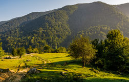 Countryside road in mountains at sunrise. Orchard behind the fence on a meadow Royalty Free Stock Photography