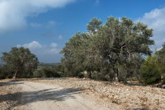Countryside road near Jerusalem Royalty Free Stock Image