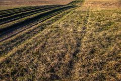 Countryside road overgrown with grass Royalty Free Stock Images