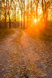 Countryside Road Path Walkway Through Autumn Forest. Sunset, Stock Photography