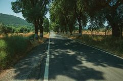 Countryside road shaded by trees alongside. Countryside road through agricultural fields shaded by trees alongside, in a sunny day near Castelo de Vide. Nice royalty free stock photography