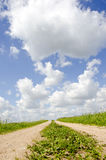 Countryside road with sky clouds Royalty Free Stock Image