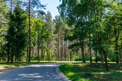 Countryside road in summer with large trees on both sides. Latvia stock photography