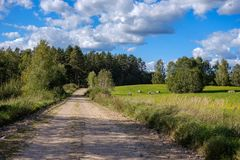 Countryside road in summer with large trees on both sides. Latvia royalty free stock photo