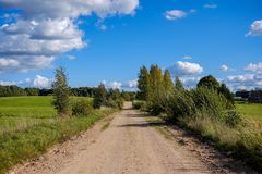 Countryside road in summer with large trees on both sides. Latvia stock photo