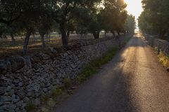 Countryside road on sunrise, landscape with olive trees near Nar stock photos