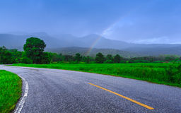 Countryside road surrounded by young rice field Royalty Free Stock Photos