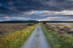 Countryside road throught marshes in morning sunlight Stock Images