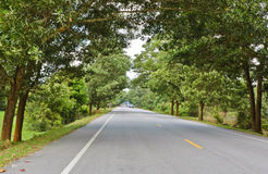 Countryside road with trees Stock Image