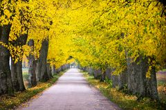 Countryside road among the trees in autumn 1 Royalty Free Stock Photography