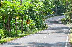 Countryside road with trees on both sides,Curve of the road Stock Photography