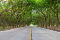 Countryside road under trees Royalty Free Stock Photography