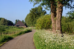 Countryside road and verge Stock Image