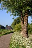 Countryside road and verge Royalty Free Stock Photography
