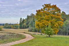 Countryside road in the Vidzeme region of Latvia Stock Images