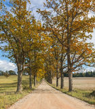 Countryside road in the Vidzeme region of Latvia Royalty Free Stock Images