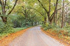 Countryside road in the Vidzeme region of Latvia Stock Photo