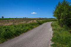 Countryside road by vineyard. A road through French countryside with a vineyard on a summer day with blue sky stock photo