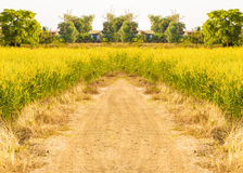 Countryside road way in Thailand Royalty Free Stock Photography