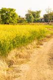 Countryside road way in Thailand Royalty Free Stock Photo