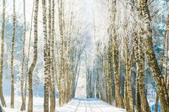 Landscape road in winter, frozen birch trees