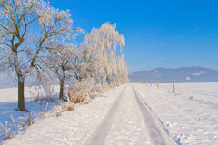 Countryside road through winter field Stock Image