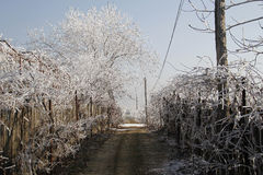 Countryside road on winter time Royalty Free Stock Image