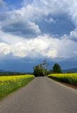 Countryside road, yellow fields, dramatic sky Stock Images