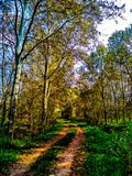 Countryside rural forest path. Scenic view of trail receding through forest. stock photo