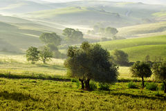 Countryside, San Quirico d`Orcia , Tuscany, Royalty Free Stock Photo