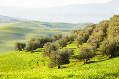 Countryside, San Quirico d´Orcia, Tuscany, Royalty Free Stock Images