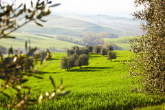 Countryside, San Quirico d´Orcia, Tuscany, Stock Photos