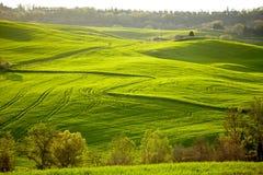 Countryside, San Quirico d´Orcia, Tuscany, Stock Photos